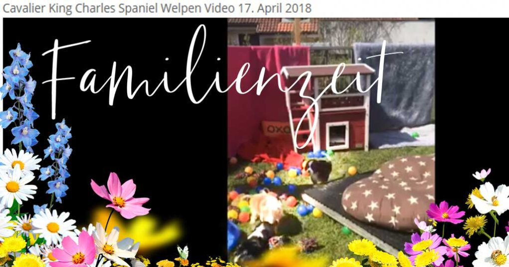 Cavalier King Charles Spaniel Welpen Video 45 neu vom 17. April 2018